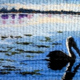 pelican-on-the-broadwater-by-deb-mcfarlane